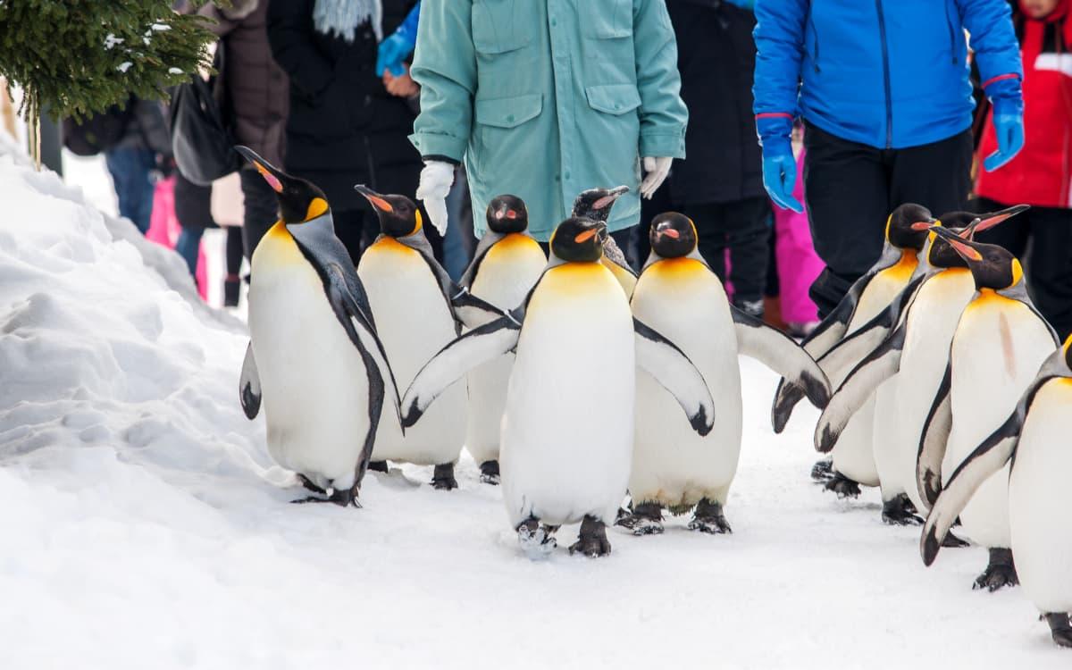 冬の旭山動物園の見どころ