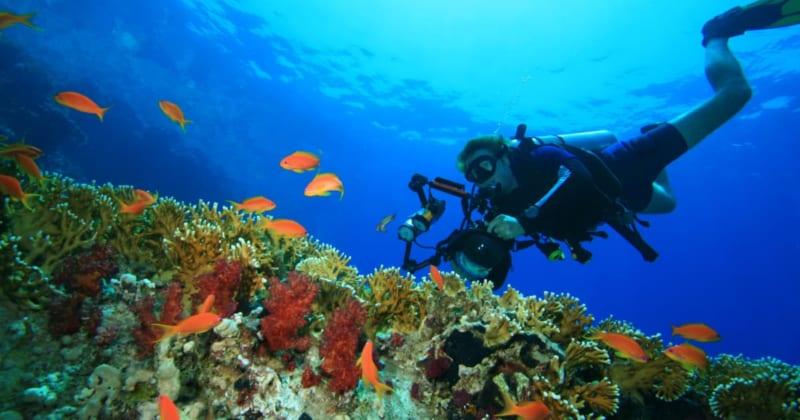 秋冬でも楽しめる!沖縄の海を満喫するおすすめアクティビティとツアー