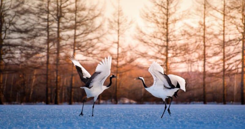 冬の釧路で幻想的なフォトジェニック撮影!観光・体験・グルメのおすすめスポット6選