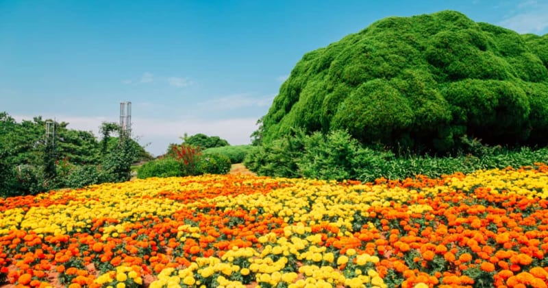 暖かい春の九州、冬は行けなかった野外スポットを満喫しよう!