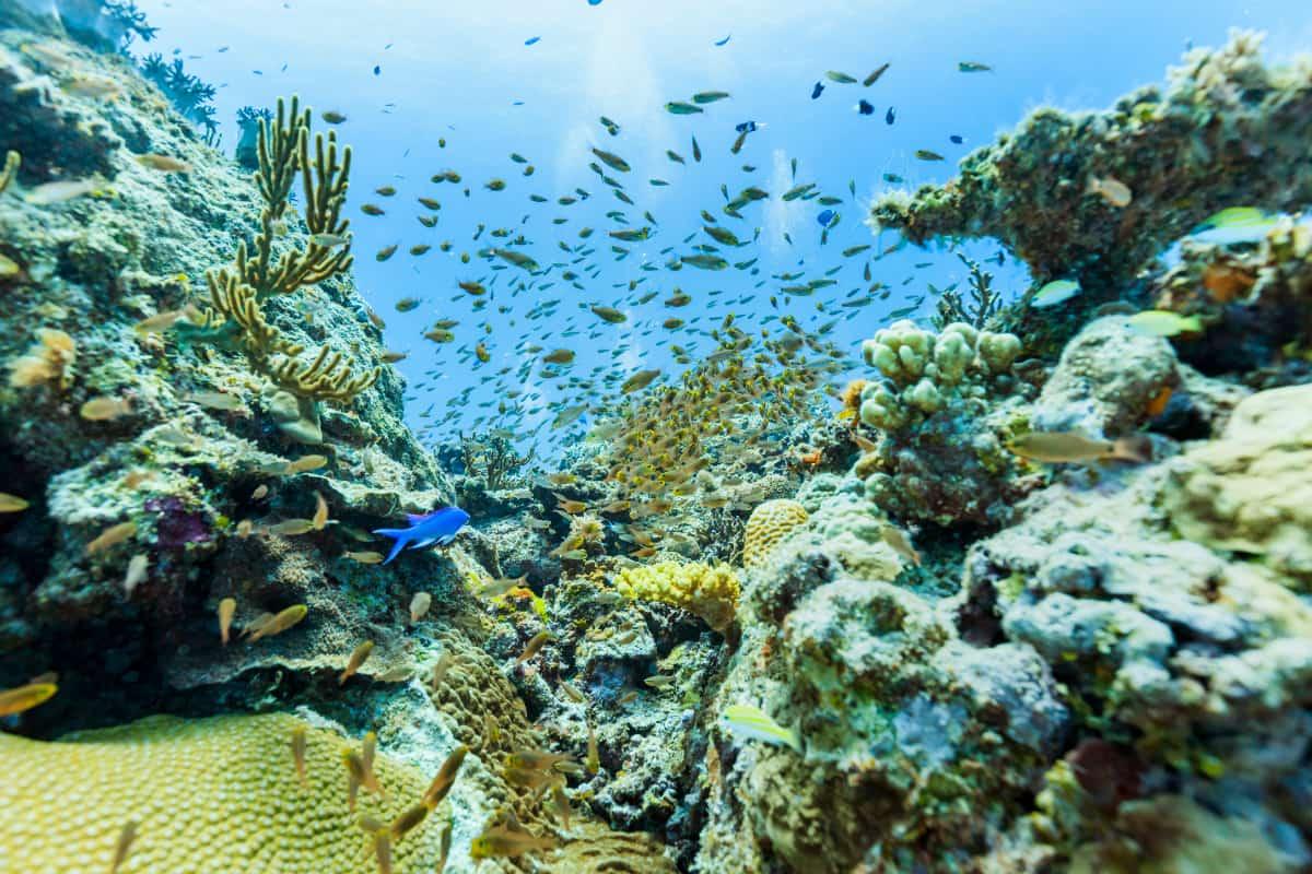 貴重なアオサンゴも!海の宝石サンゴ礁