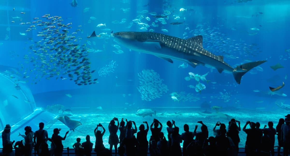 沖縄の海の魅力が詰まった「沖縄美ら海水族館」