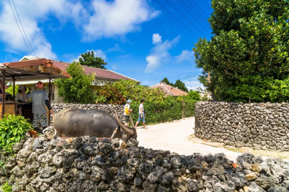 昔ながらの沖縄文化を楽しめる「琉球村」