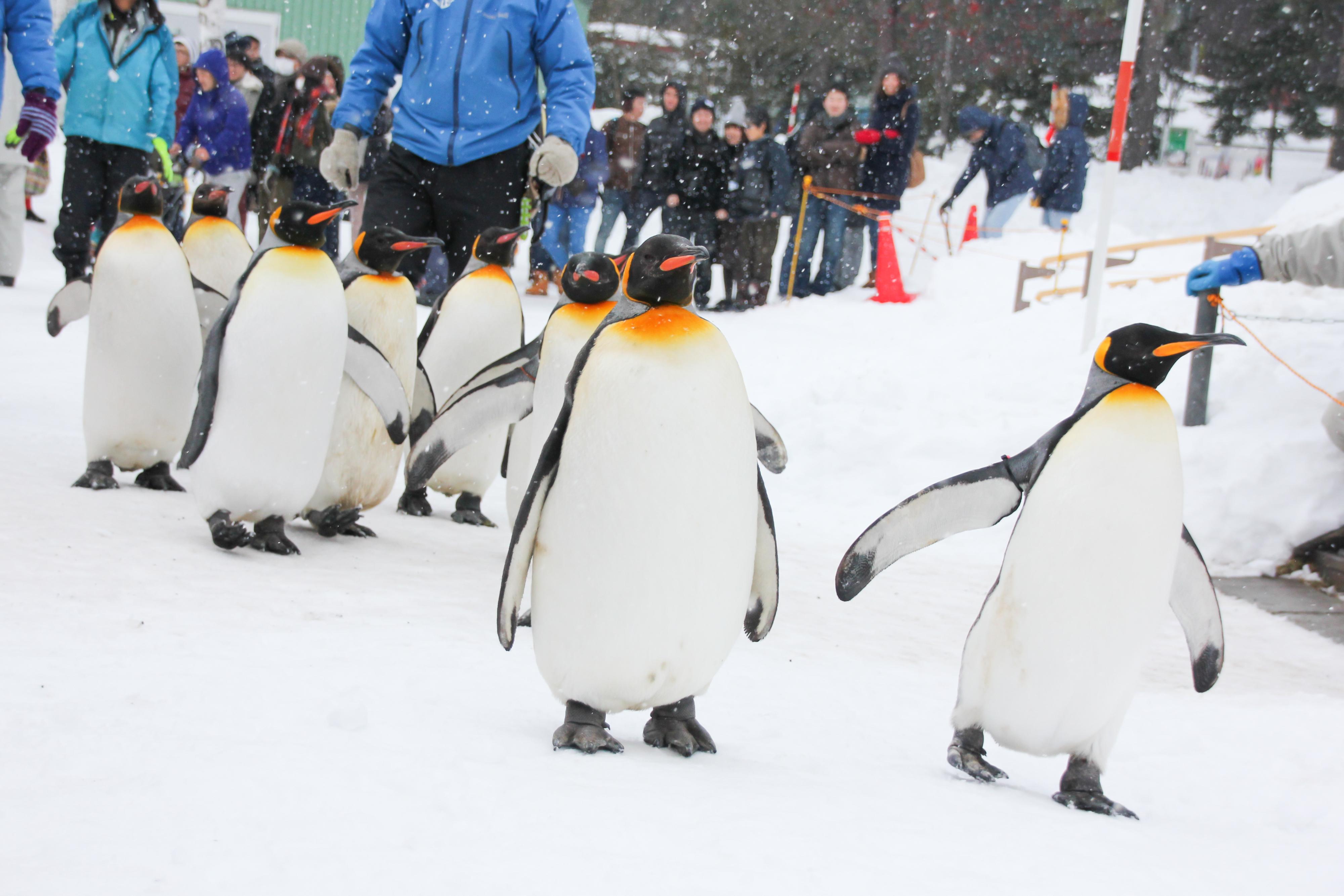 寒さが嬉しい動物たちの動物園