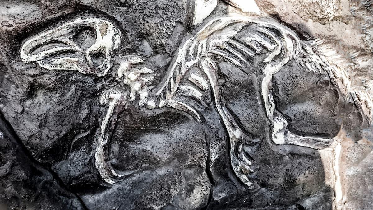 タイムスリップ!?福井県立恐竜博物館