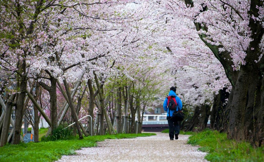 福井県のおすすめ観光名所を思い切り満喫しよう!