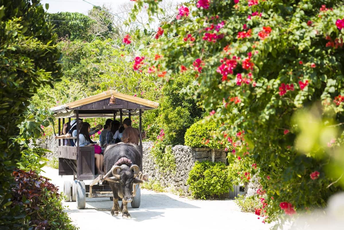 竹富島観光では外せない!水牛車でゆったり巡る風情ある集落